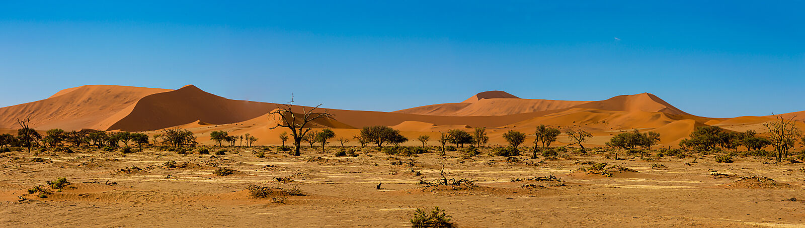 The dunes at Sussvlei, Namibia.