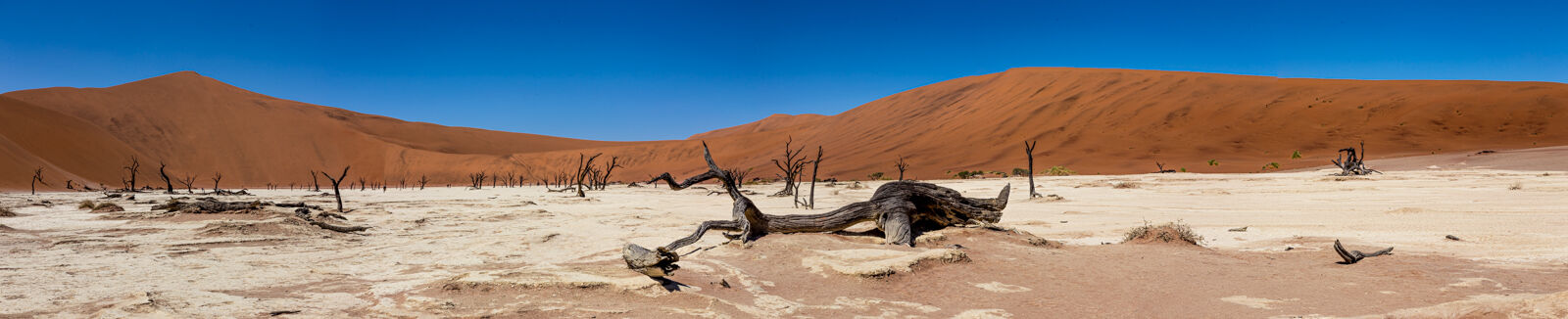The Deadvlei at Sussusvlei.