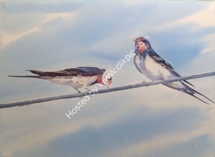 Swallows Nesting