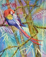 Scarlet Macaw in Corcovado