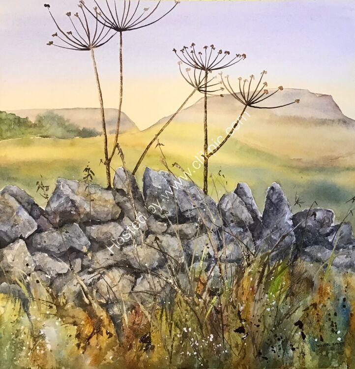Drystone Wall & Hogweed