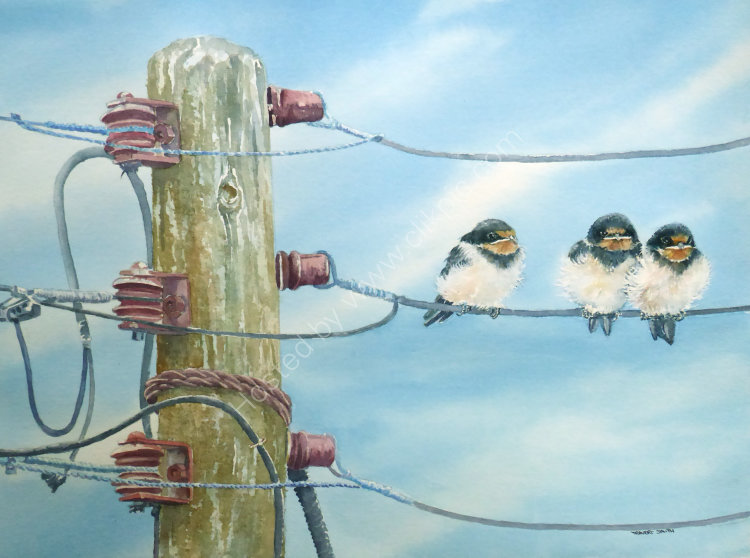 Baby Swallows on a Wire