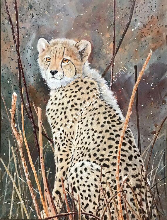 Cheetah Cub at Pilansberg
