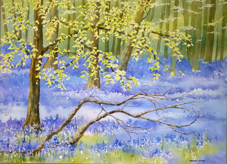 Bluebell and Beech Trees in Dockey Wood