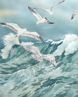Gulls over a Rolling Wave