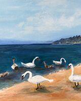 Swans on Beach Agia Paraskevi, Skiathos
