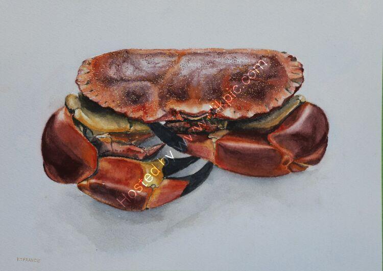 Rons crab watercolou