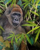 Lowland s Gorilla