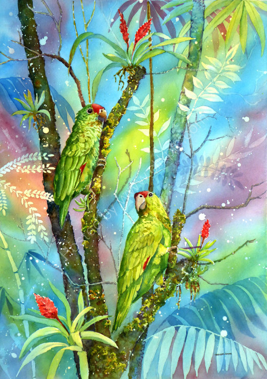 Red Lored Parrots in Costa Rica
