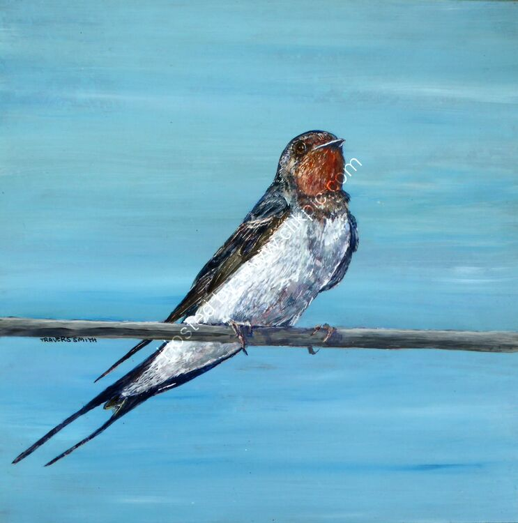 Swallow on a Wire