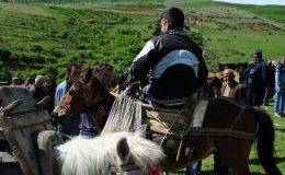 Cattle market, Albania