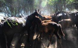 Wild horses, Aksu Zhabagly, Kazakhstan