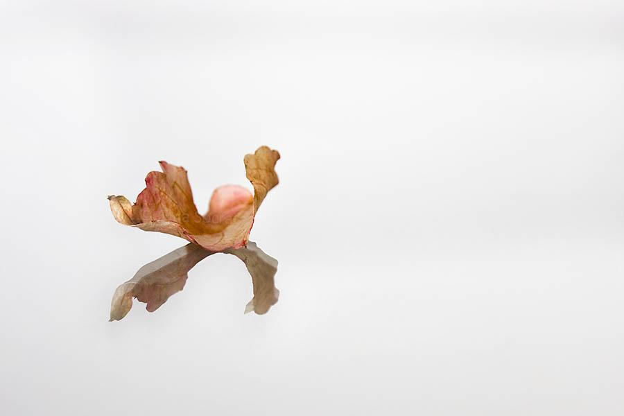 Autumn Leaf 15