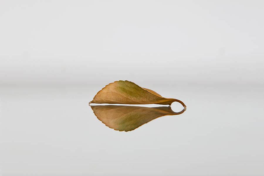 Autumn Leaf 18
