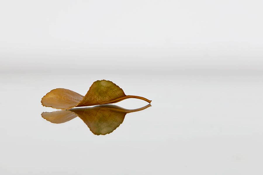 Autumn Leaf 21