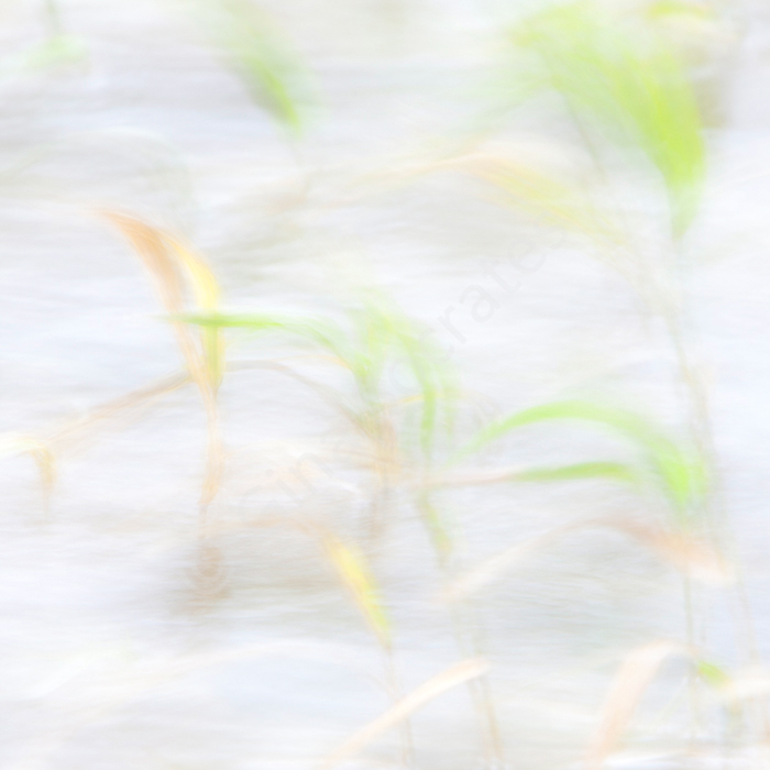 Grasses Blowing in the Wind 02