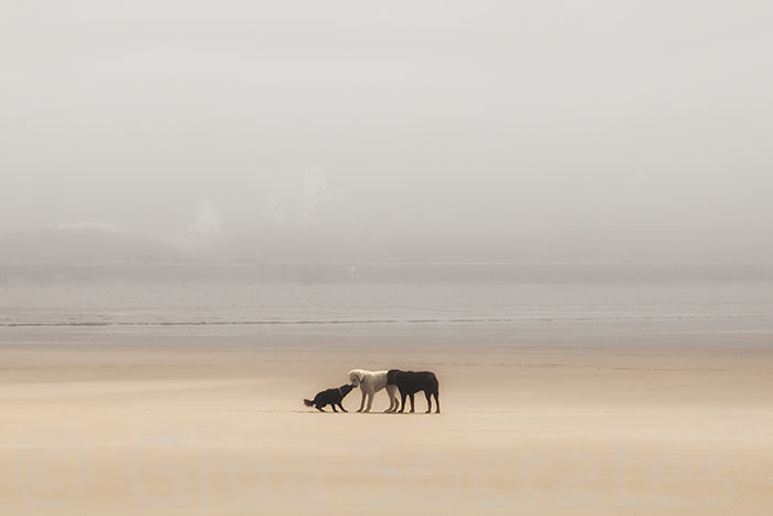 Puppy Love Misty Days on the Beach  - St. Brelade's Bay