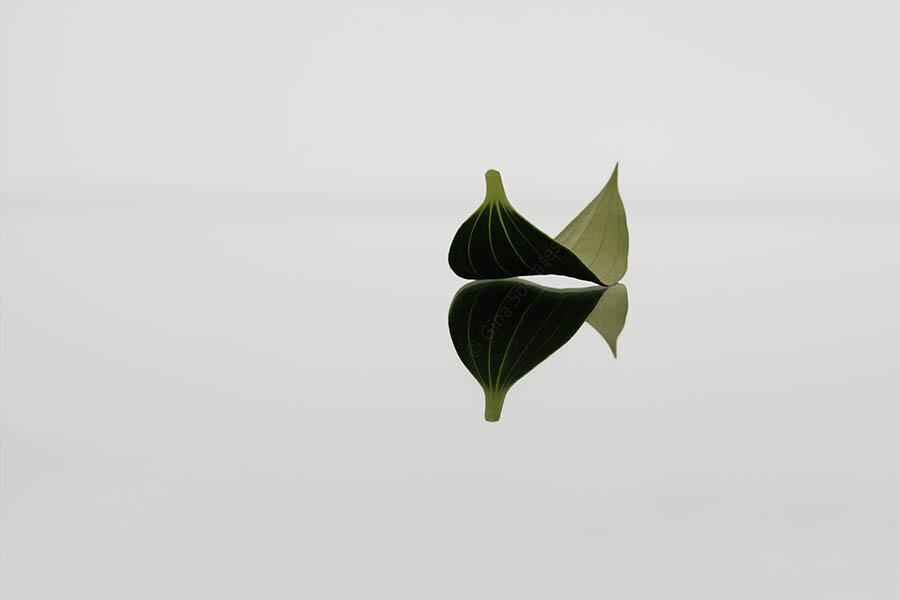 Spring Leaf 1