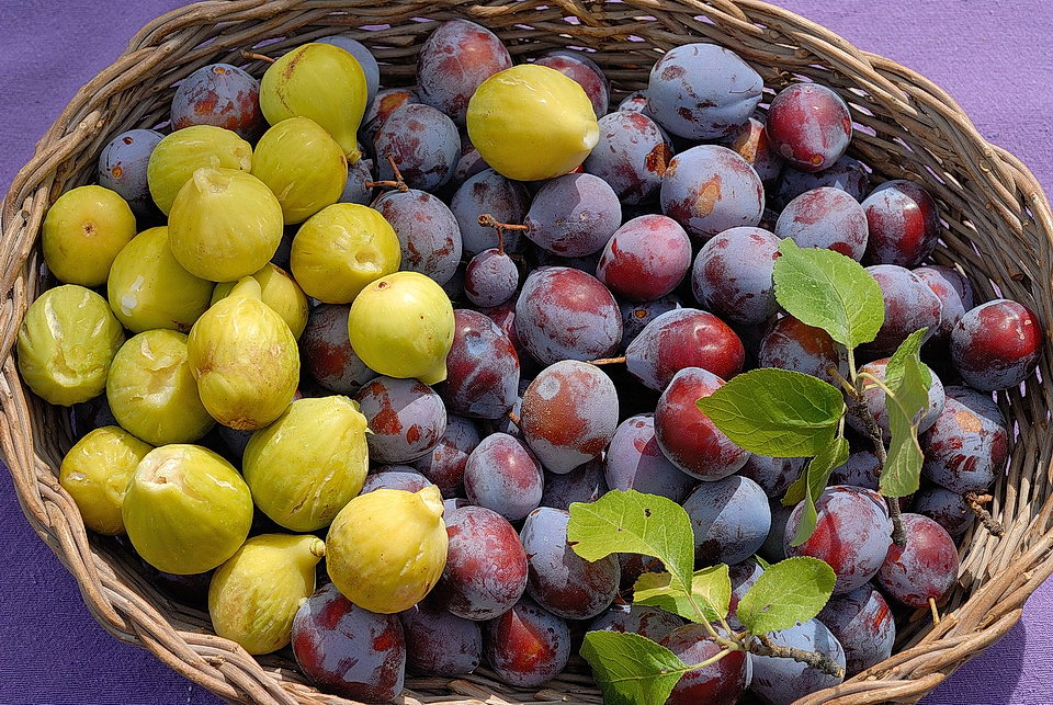 autumn figs and plums