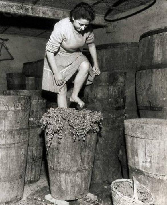 grape stomping 1955