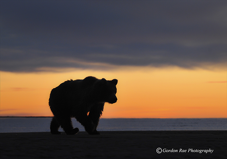 Dawn Light - Alaska