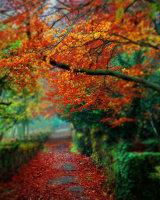 Autmn Path