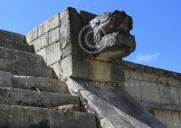 Mayan Iguana