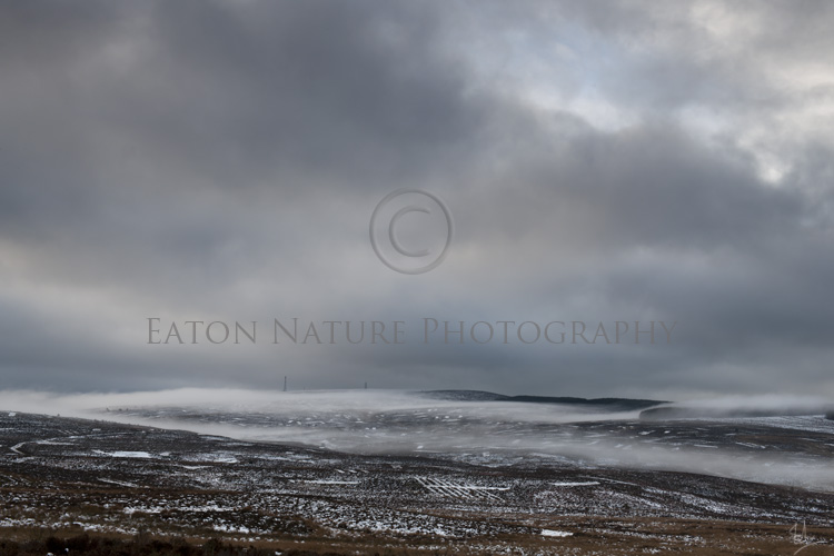 A blanket on the moors