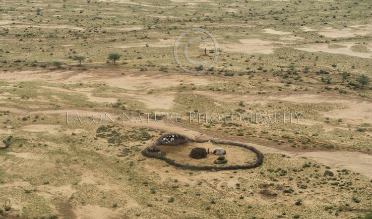 A Maasai homestead