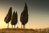 9 Cypress trees and a cross
