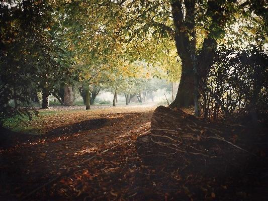 Woodland early morning