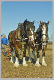 Wragby Ploughing Match March 2014