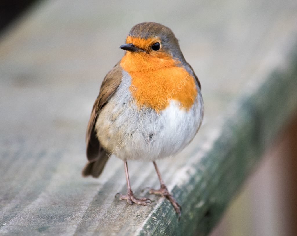 Robin on handrail