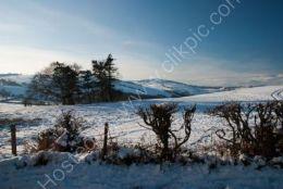 Snow Scene(2)