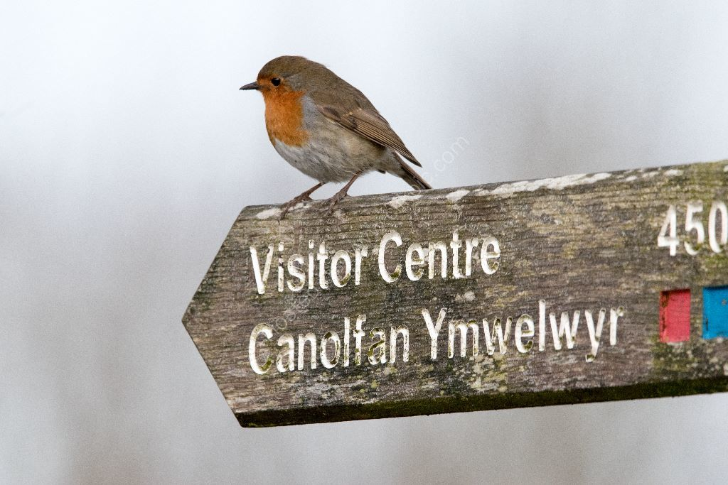 Robin on a sign
