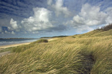 Marram Grass Newborough Beach