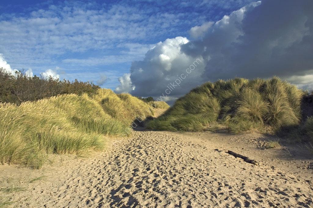 Sand Dunes Newborough Beach