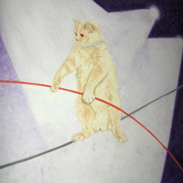 Andromeda on the tightrope