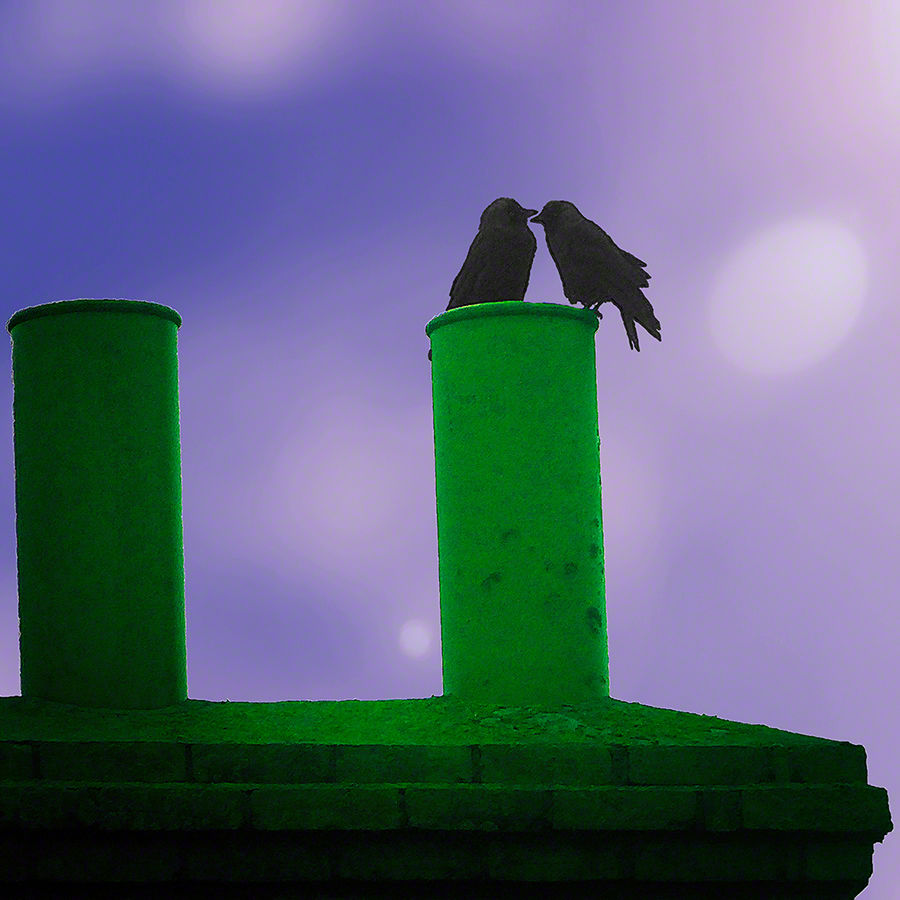 Chimney Birds at Breaking Dawn