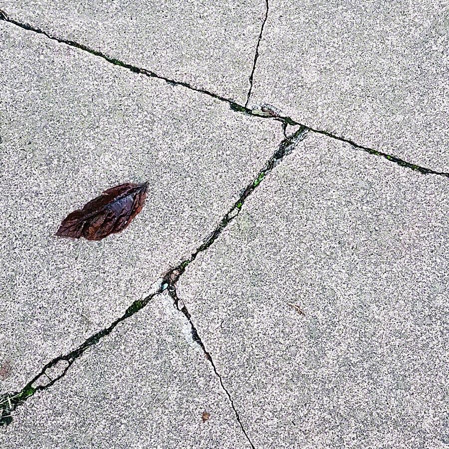 Cracks and Leaf