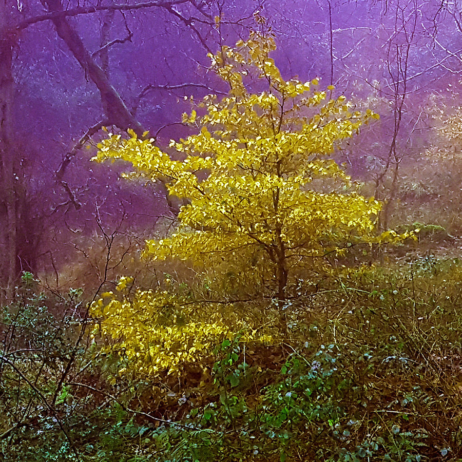 Fairy Tree?