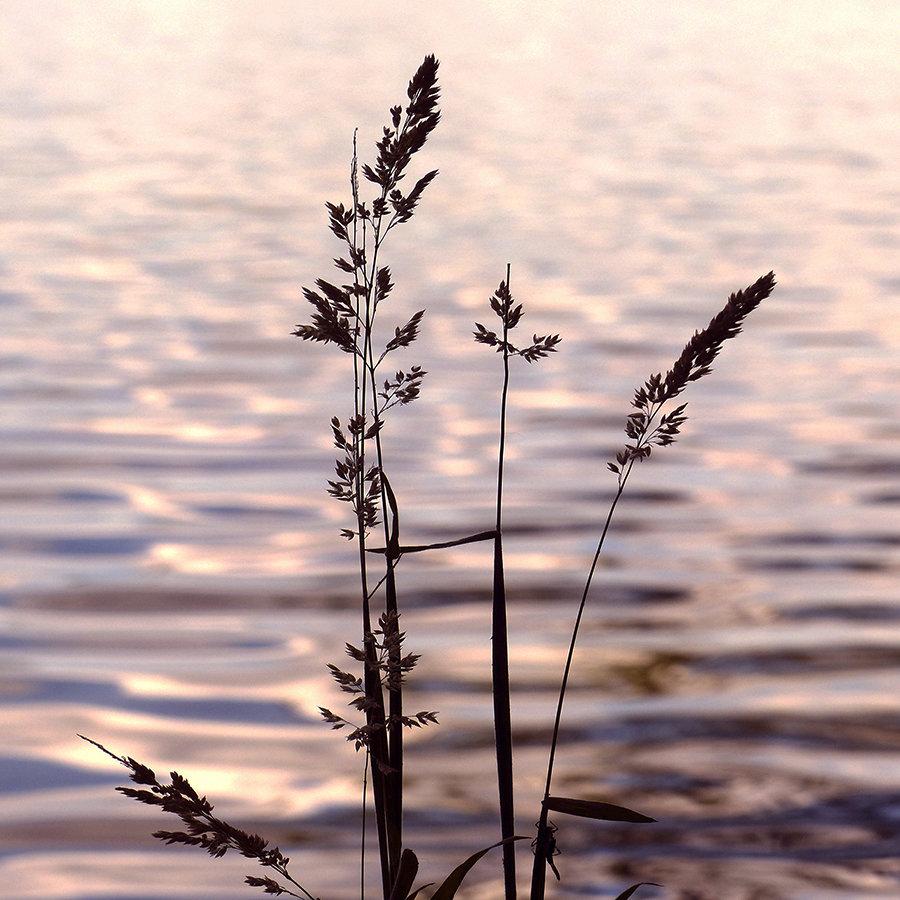 Grass Siluette