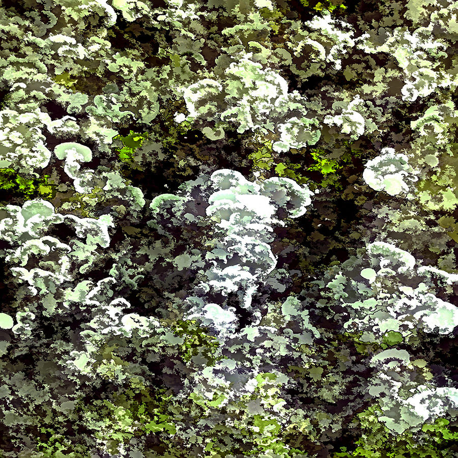 Lichen Colours