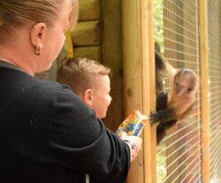 Monkey asks for a crisp