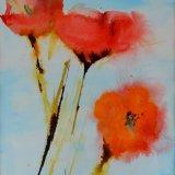 Poppy evanescence