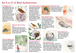 An A-Z-of-bird-architecture
