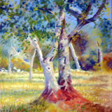 Portuguese Olive Tree Study