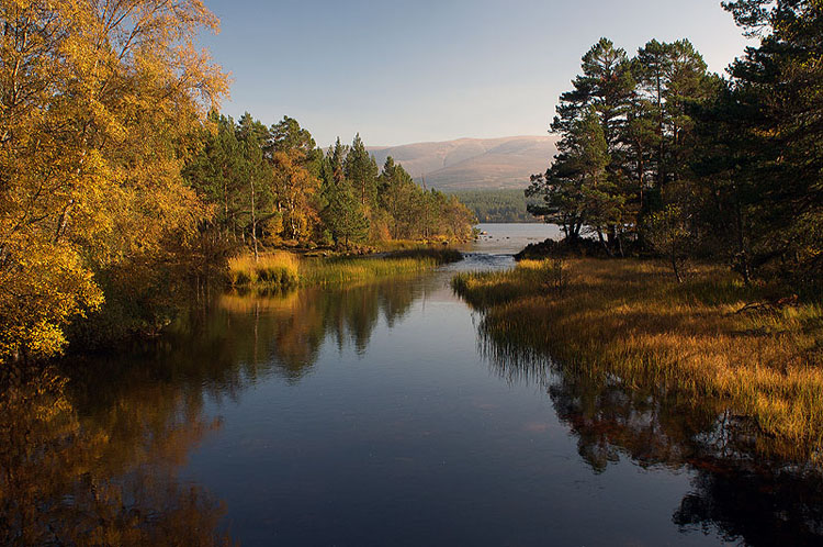 Autumn Colour, Loch Morlich