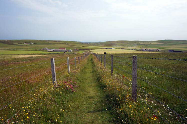 Marwick Head Walk