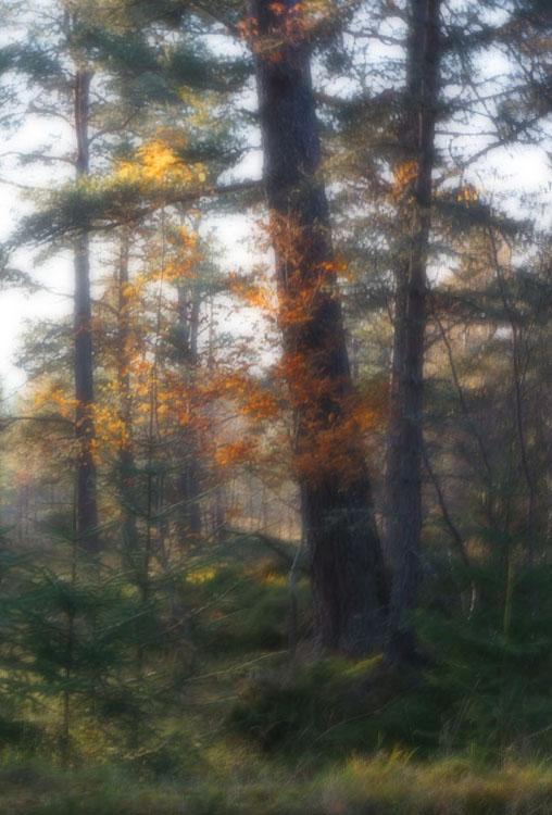 Autumn Twinkle
